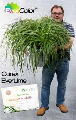 Carex EverColor® 'Everlime' with breeder Fitzgerald Nurseries ltd.