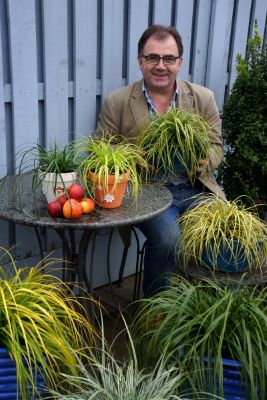 Carex EverColor® 'Eversheen' with breeder Fitzgerald Nurseries ltd.