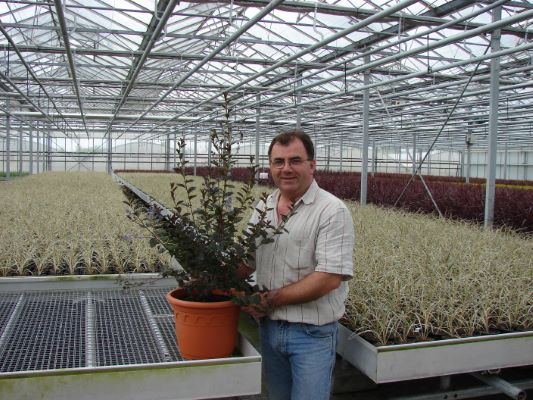 Ceanothus Tuxedo with breeder Fitzgerald Nurseries ltd.