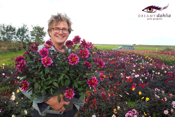 Dahlia Dreamy® Nights with breeder Preijde Bloembollen
