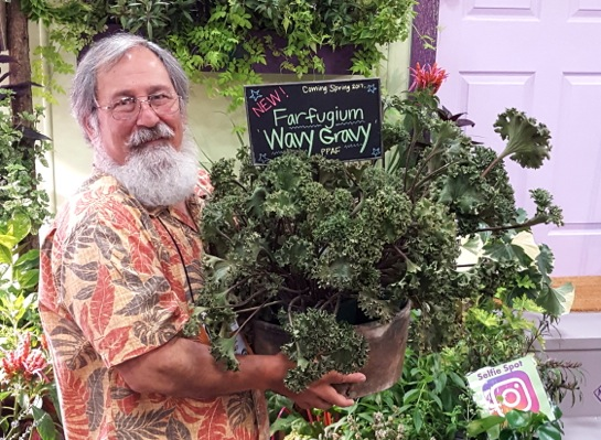 Farfugium Wavy Gravy with breeder Peace Tree Farm