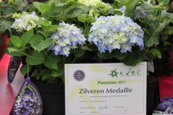 Medals earned by Hydrangea macrophylla Spike