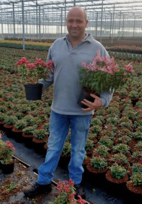Pieris Passion Party™ Passion Frost with breeder Boomkwekerij R. van Opstal