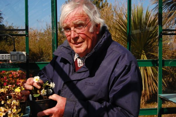 Primula Irish Primrose™ Drumcliff with breeder Joseph Olivier Kennedy