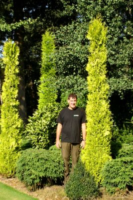 Thuja Golden Spire with breeder Daniels Boomkwekerij-Potcultures