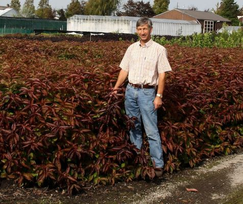 Weigela Wings of Fire with breeder Henny Kolster