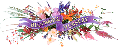 Logo of Blooming Nursery
