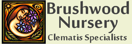 Logo of Brushwood Nursery