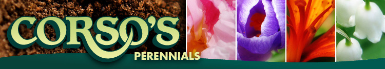 Logo of Corsos Perennials