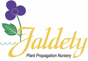 Logo of Jaldety