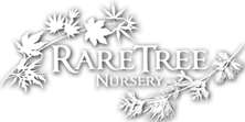 Logo of MS Rare LLC, dba Rare Tree Nursery