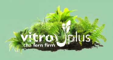 Logo of Vitro Plus B.V.