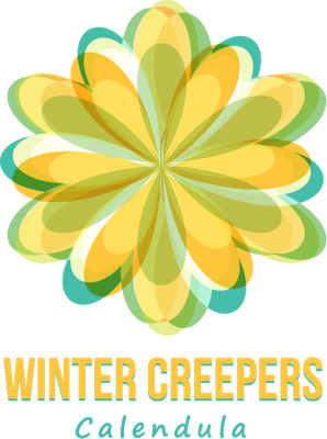 Image of Calendula Winter Creepers™ Nectarine & Frost