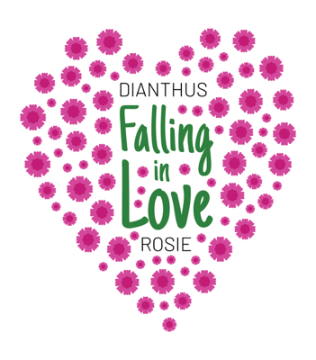 Image of Dianthus Falling in Love Rosie