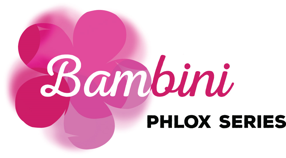 Image of Phlox Bambini® Candy Crush