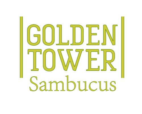 Image of Sambucus Golden Tower