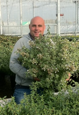 Abelia Lucky Lots with breeder Wevo B.V.