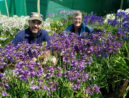 Agapanthus Poppin' Purple with breeder De Wet Plant Breeders