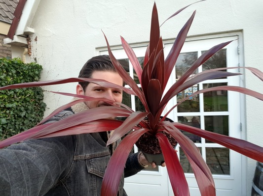 General image of Cordyline Superstar