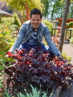 Heuchera Dark Secret in garden