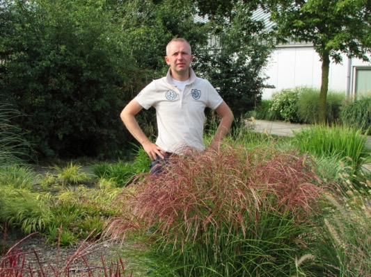 Miscanthus Red Cloud® with breeder