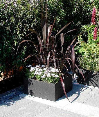 Phormium Black Adder on patio