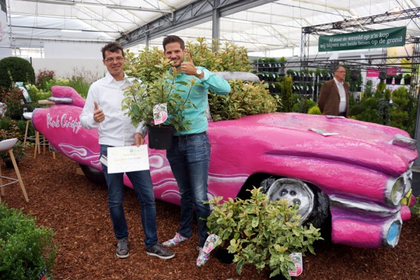 Medals earned by Photinia Pink Crispy
