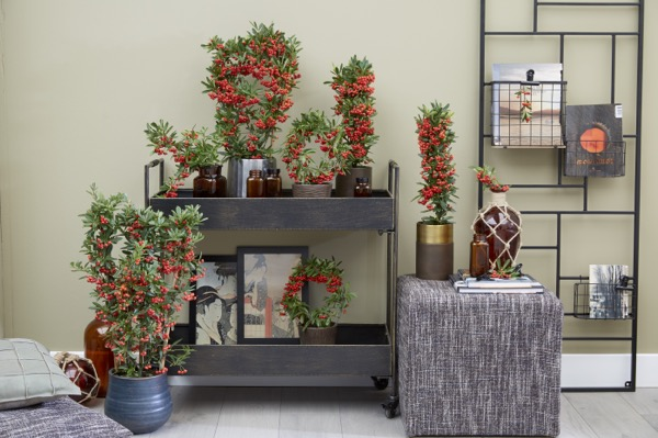 General image of Pyracantha Red Star