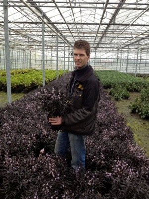 Strobilanthes Brunetthy with breeder