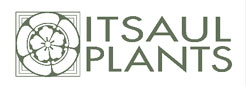 Logo of Itsaul Plants