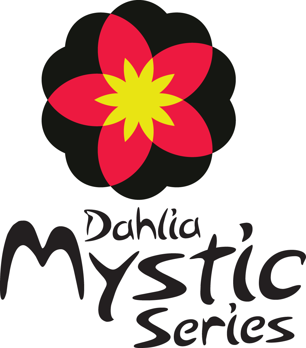 Image of Dahlia Mystic Illusion
