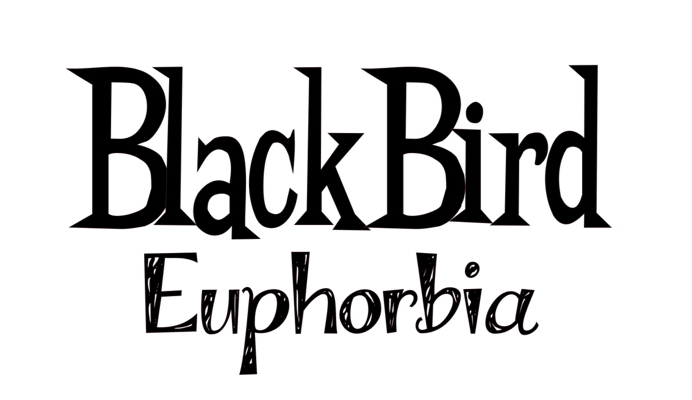 Image of Euphorbia Blackbird