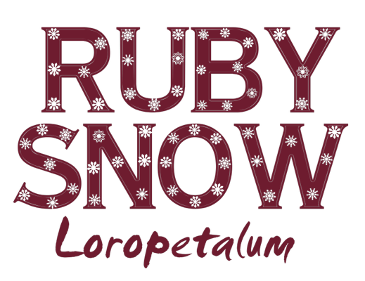 Image of Loropetalum Ruby Snow