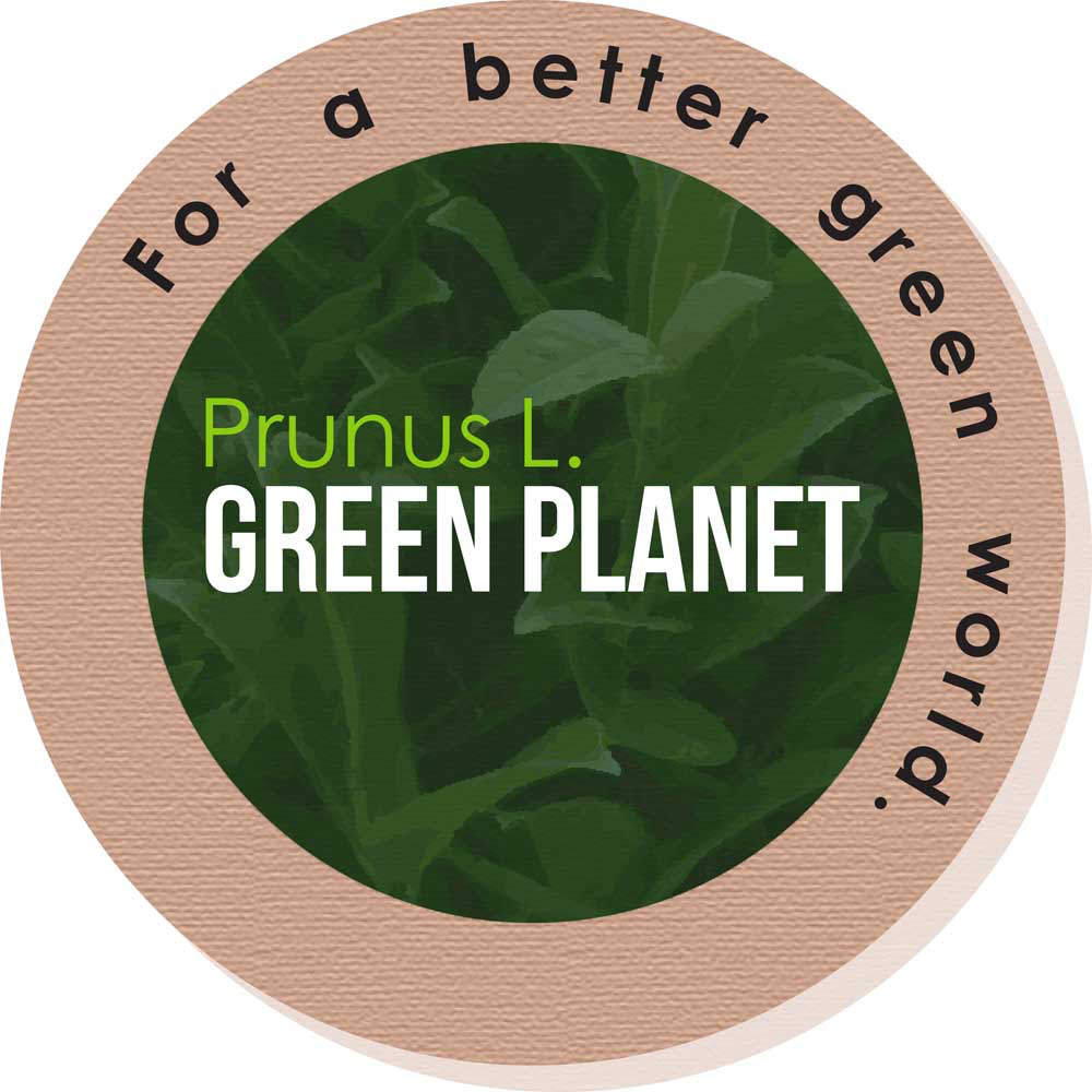 Image of Prunus Green Planet