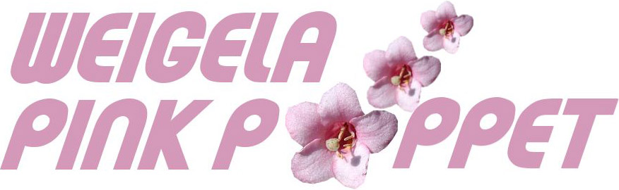 Image of Weigela Pink Poppet